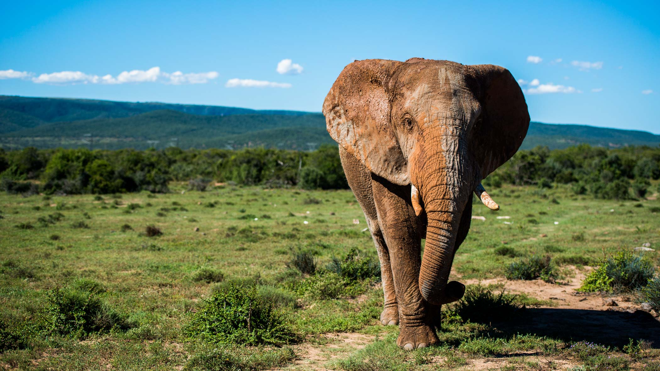Addo Elephant Park Zuid Afrika