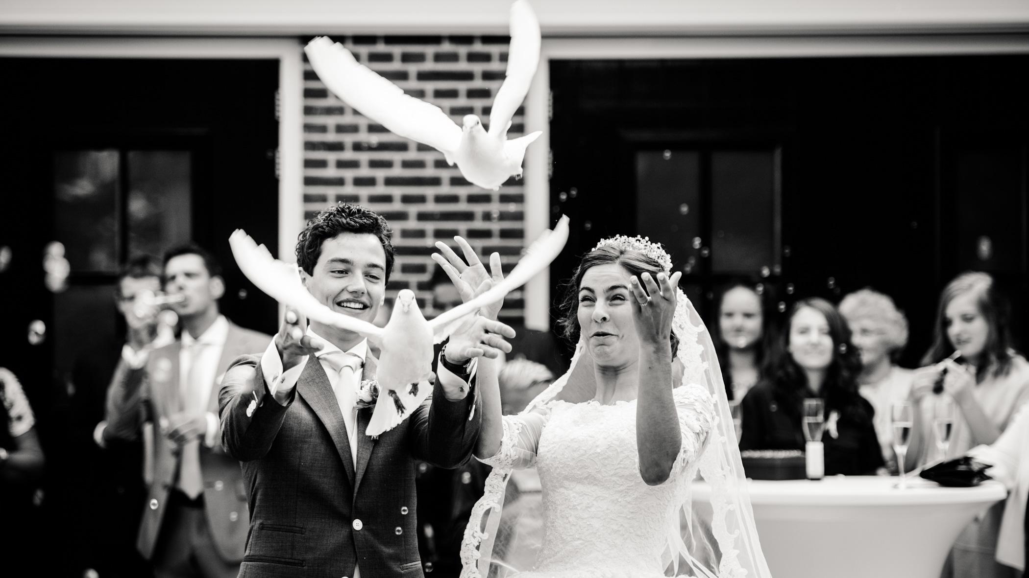 Witte duiven bruiloft